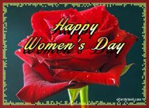 eCards Women's Day Women's Day Rose, Women's Day Rose