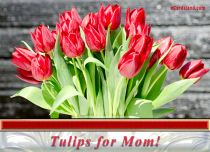 Free eCards - Tulips for Mom,